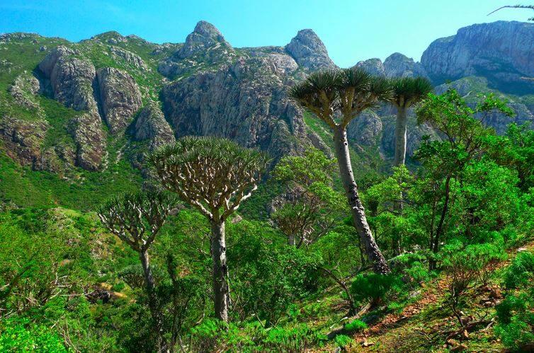 سقطرى .. الجزيرة الجميلة المنسية والمهملة.. تحاصرها حتى الطبيعة فأين الحكومة؟