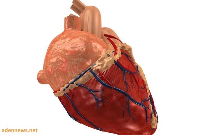 كيف تؤثر القرارات التي يتخذها عقلك على صحة قلبك؟