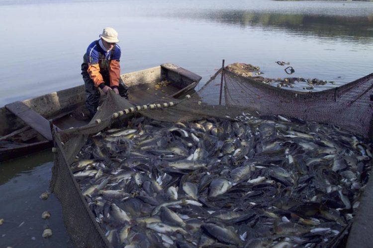 السعودية تحظر استيراد الاسماك الحية من ماليزيا وتايلاند