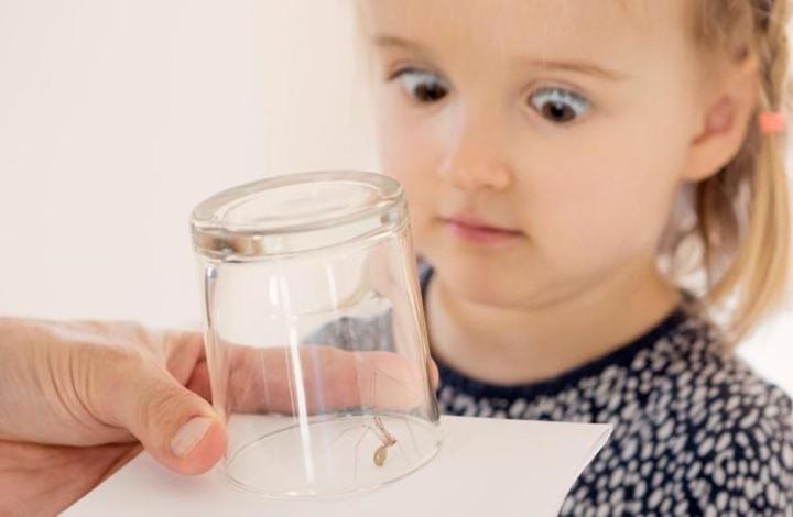هل تعلم أنك تعيش مع عدد كبير من الحشرات في بيتك؟