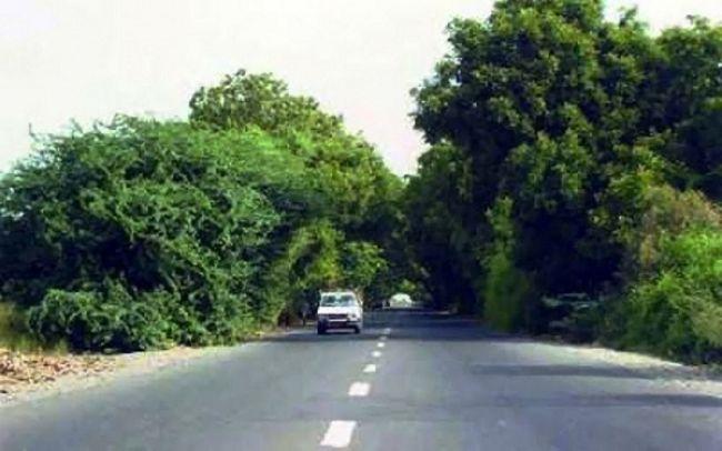 النظافة والتحسين بأبين يدشن حملة تشجير للشوارع الرئيسية في مديرية زنجبار