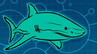 جلود أسماك القرش تلهم باحثين للحد من عدوى الإصابات البكتيرية
