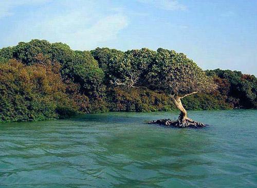 عددها 105 جزيرة… تعرف على أسماء جميع الجزر اليمنية