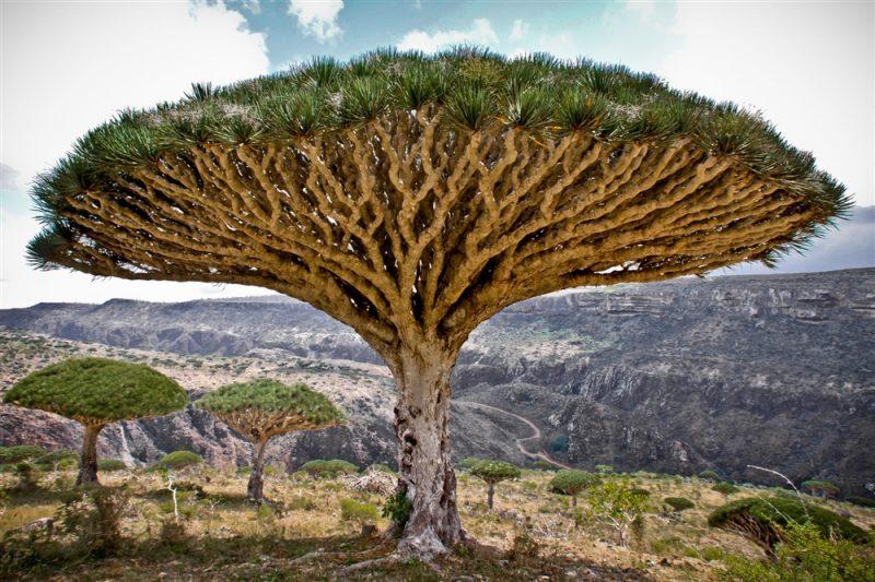 تحذيرات من تحويل الإمارات جزيرة سقطرى إلى واحدة من المآسي البيئية والثقافية في اليمن
