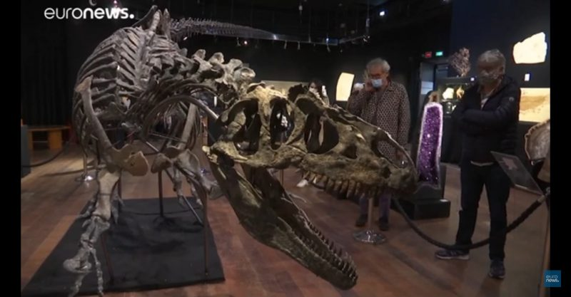 باريس.. عرض هيكل ديناصور نادر للبيع في المزاد العلني